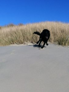 JasperontheDune3