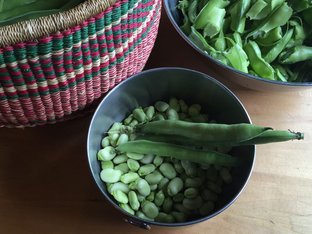 Fava Beans Truly Are Magic Beans