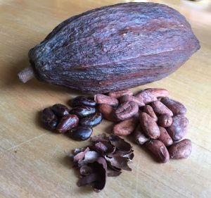 Clockwise from top: Dried Cacao Pod, Dried Cacao Beans (light brown), Roasted Cacao Husks, and Roasted Cacao Beans (dark brown)