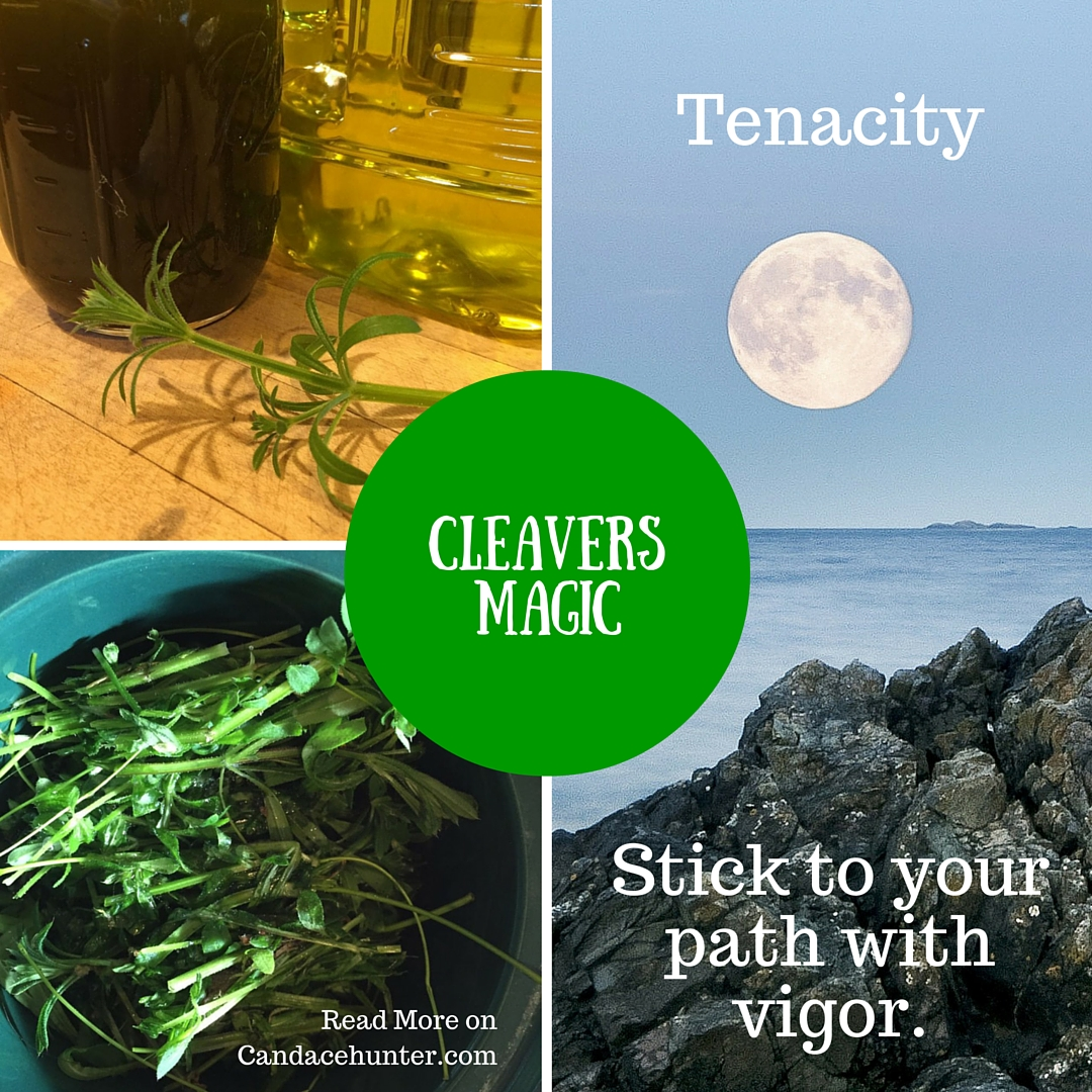 Cleavers Magic: Tenacity!