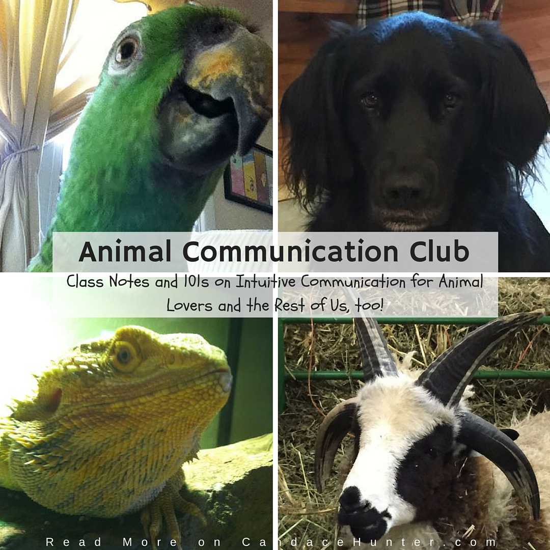 Learning To Trust Your Intuitive Skills: Animal Communication 101