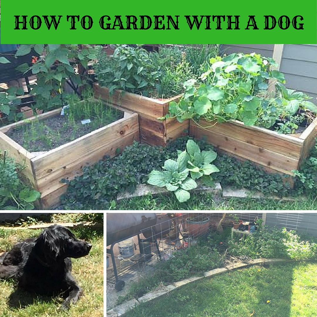HOW TO GARDEN WITH DOG