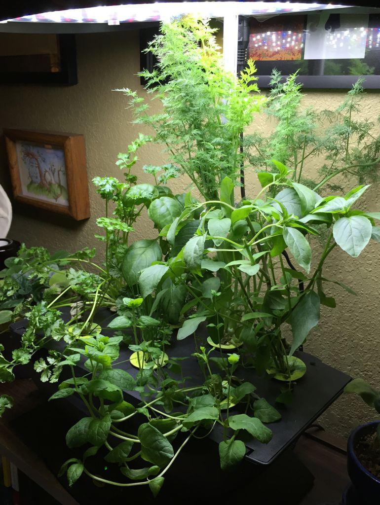 Indoor Gardening Success Even In A Small, Dark Space