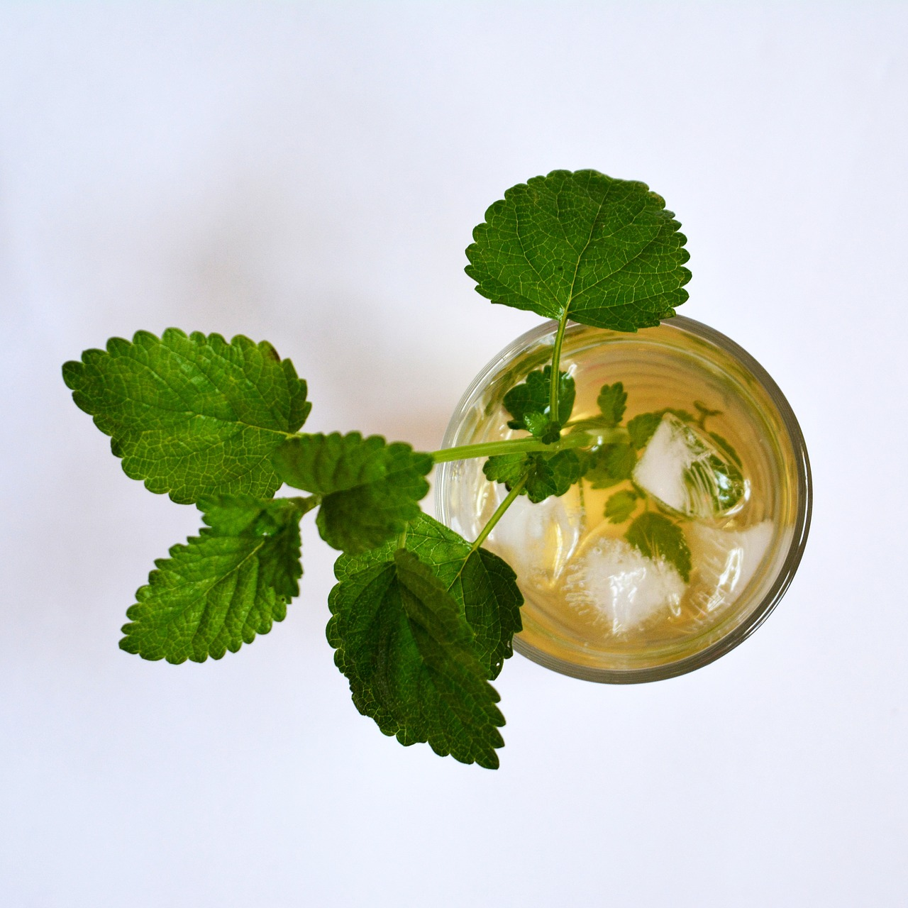 Lemon Balm Magic: Soothing The Oppressed Spirit