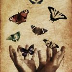 Butterflies Thanks To Pixabay